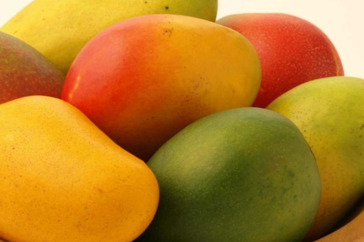 Totapuri Mango2