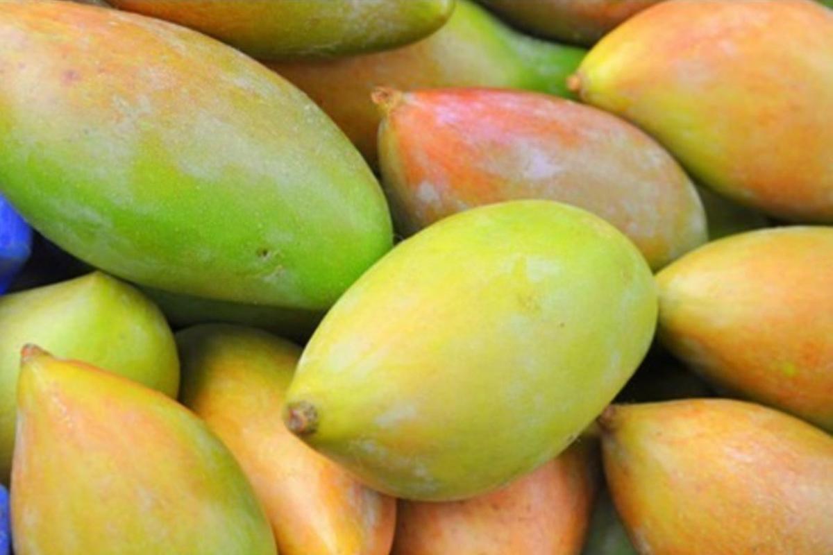 Totapuri Mango3