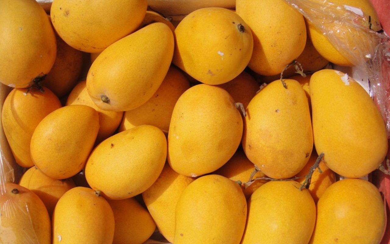 food-service-mango-point-alphonso-mangoges